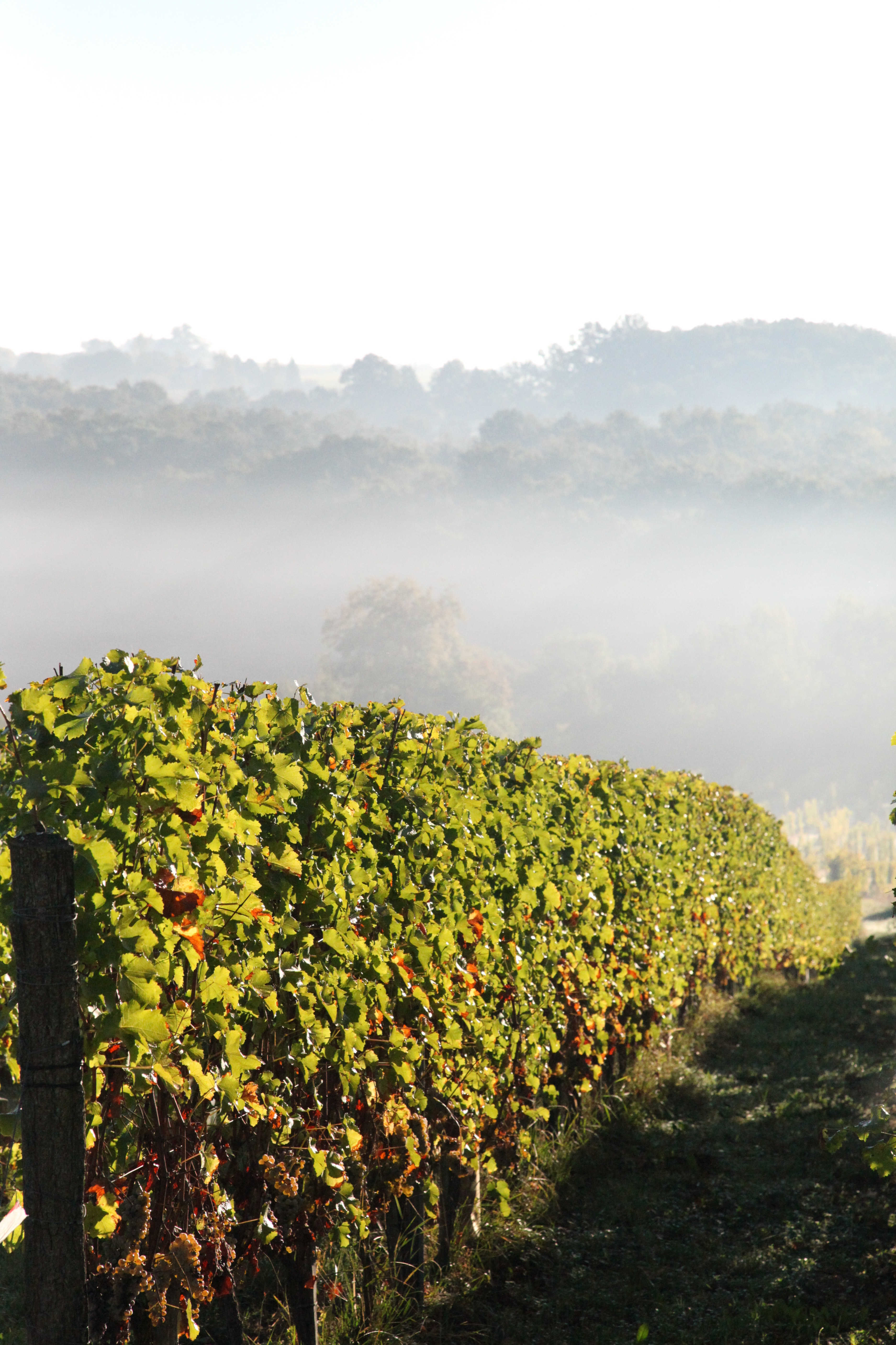 Brume matinale à Montdoyen